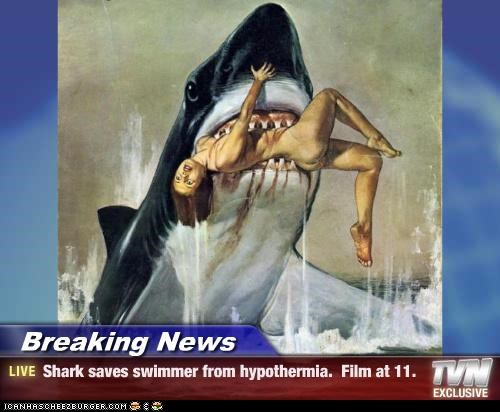 Breaking News - Shark saves swimmer from hypothermia. Film at 11.