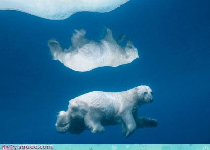acting like animals,bear,double,mirror,mirrored,poem,polar bear,reflection,threat