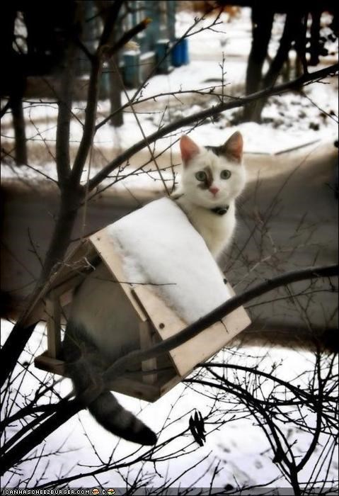 birdhouse,birds,cyoot kitteh of teh day,snow,winter