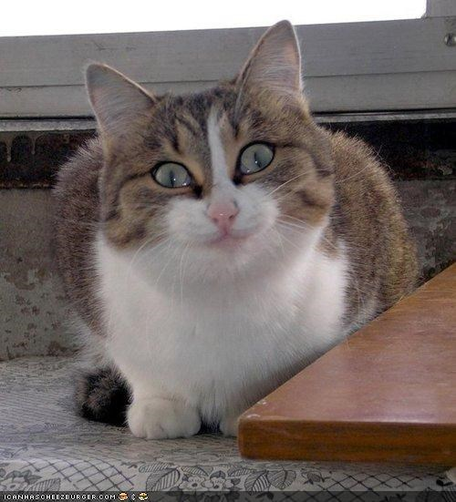 crazy creepy cyoot kitteh of teh day expression medicine scary shiny smile smiling - 4442769664