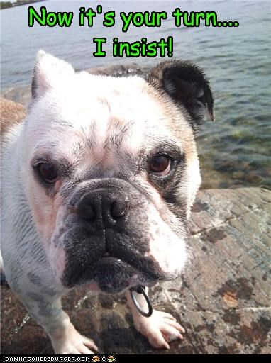 bulldog displeased do not want insistence insisting soaked swimming turn unhappy upset water wet your yours - 4442790656