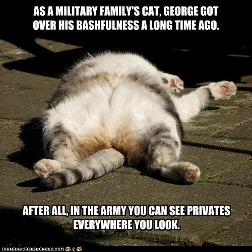 army,bashful,bashfulness,caption,captioned,cat,double meaning,military,privates,pun,shame,sleeping