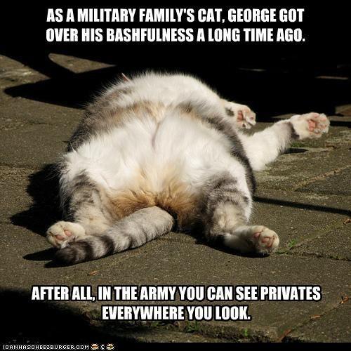 army bashful bashfulness caption captioned cat double meaning military privates pun shame sleeping - 4442813184
