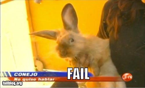 bunnies failboat g rated interview news really spanish television