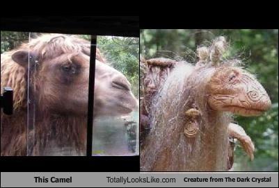 This Camel Totally Looks Like Creature from The Dark Crystal