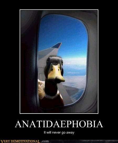 airplane ducks phobia scared
