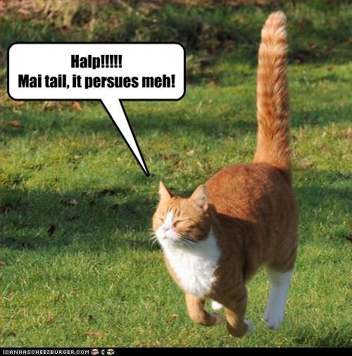 Halp!!!!! Mai tail, it persues meh!