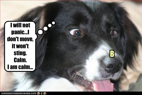 afraid b bee border collie calm dont move panic still sting stinging will not worried - 4443538688
