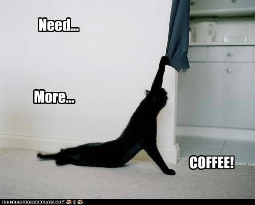 caption captioned cat coffee cranky dragging exhausted Hall of Fame more morning need shouting tired - 4443544064