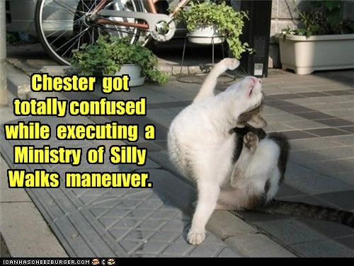 attempting caption captioned cat confused executing FAIL Hall of Fame maneuver ministry monty python silly walks - 4444071424