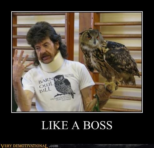 boss,mustache,neck brace,Owl,sweet hair