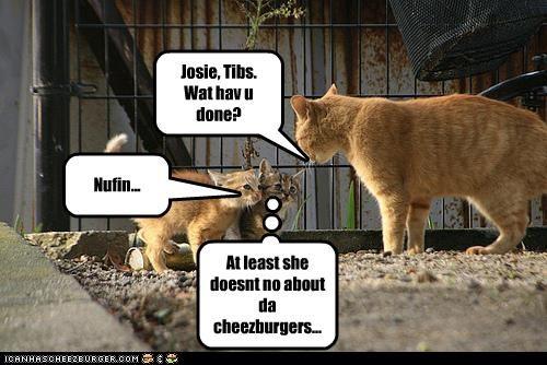Cheezburger Image 4444504832
