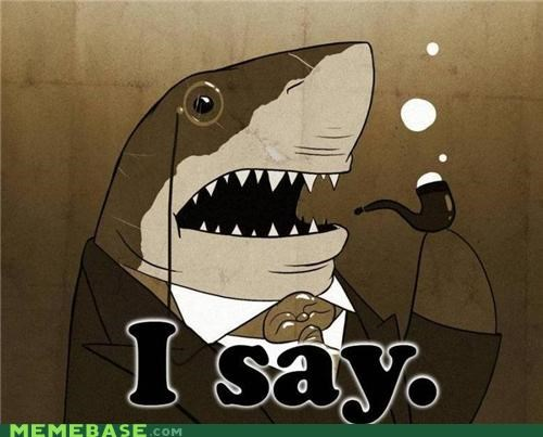 animemes,fancy,i say,sir,sea animals,shark