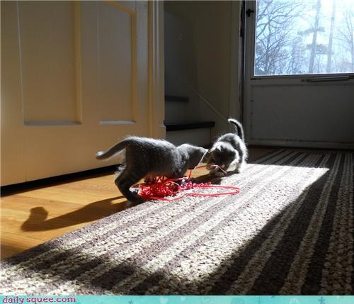 cat Cats center stage kitten playing reader squees rescued show spotlight sun sunlight