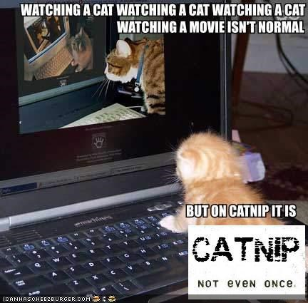 caption captioned catnip computer drugs Hall of Fame Movie recursive we have to go deeper - 4444843008