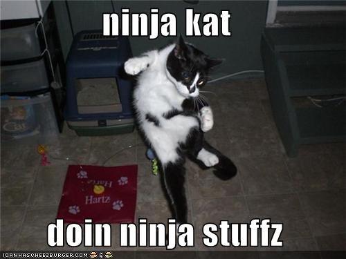 ninja kat  doin ninja stuffz