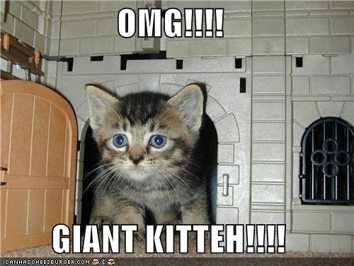 OMG!!!!  GIANT KITTEH!!!!