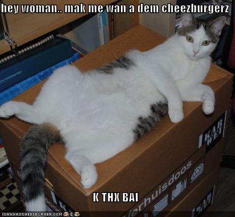 Cheezburger Image 4445229568
