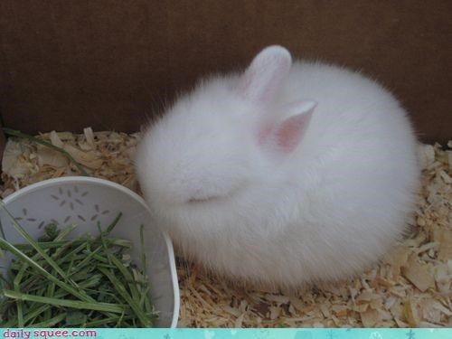 adorable bundle bunny cloud curled up Fluffy poofy sleeping squee tiny white - 4445584640