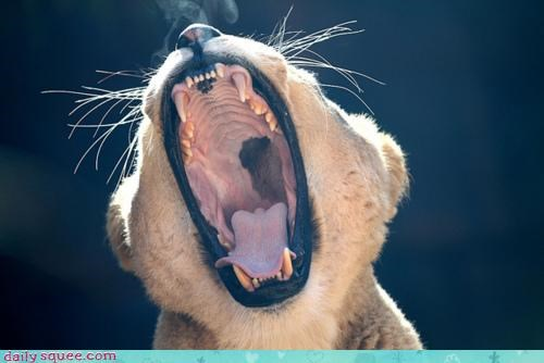 acting like animals big cat breathing cat dragon fire threat - 4445588992
