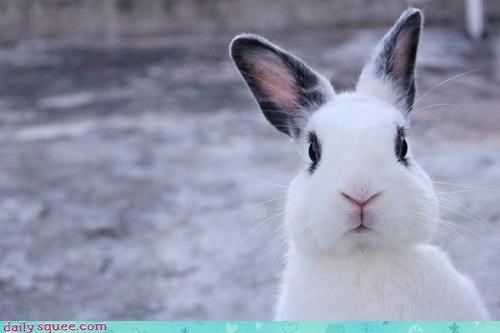 bunny caught crime criminal cute expression guilty hands red handed shocked startled white