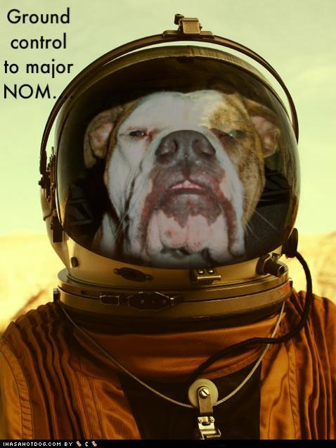 astronaut,bulldog,costume,david bowie,dressed up,ground control,lyric,lyrics,major,major tom,nom,parody,photoshop,rhyme,song