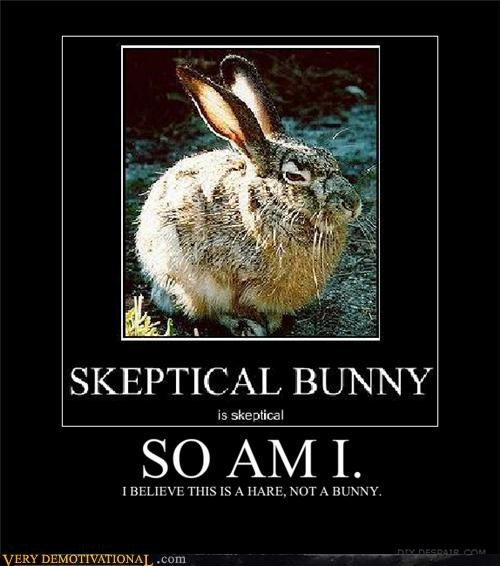 so am i bunny animals - 4445727488