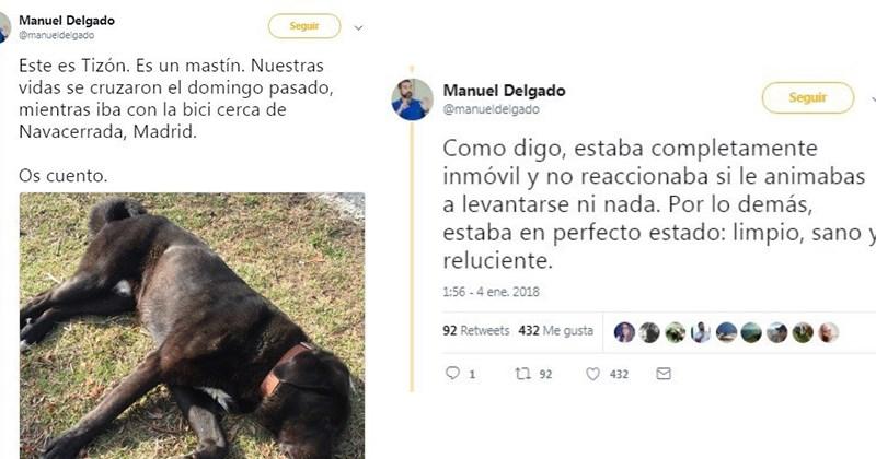 encuentra perro moribundo