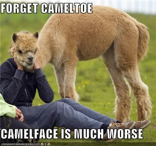 FORGET CAMELTOE CAMELFACE IS MUCH WORSE