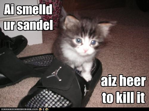 Ai smelld ur sandel aiz heer to kill it