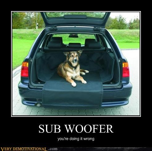 speakers car dogs sub woofer