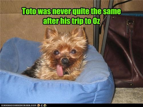 beanbag,critters,movies,terrier,toto,wizard of oz