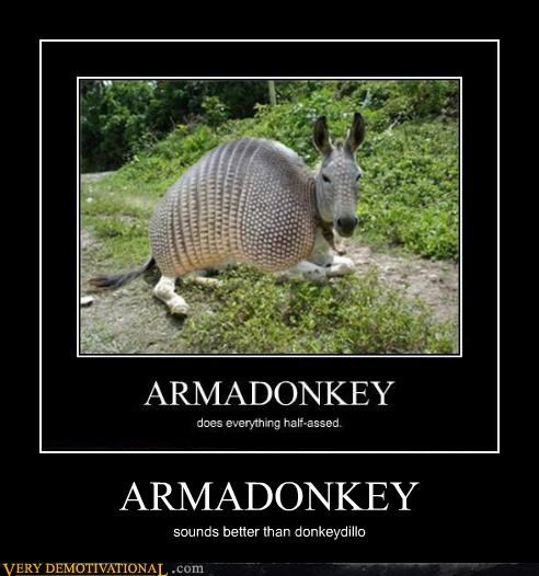 armadillo donkey mash up - 4446814976