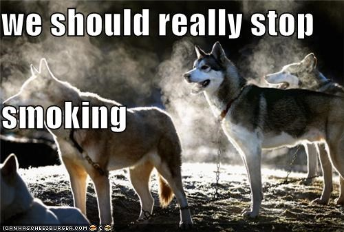 breathing,group,husky,malamute,really,should,smoke,smoking,steam,suggestion