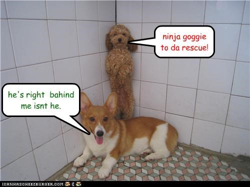ninja goggie to da rescue! he's right bahind me isnt he.