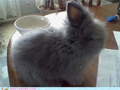 baby bunny floof Fluffy Hall of Fame happy bunday rabbit reader squees - 4447506688