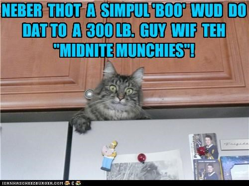 boo caption captioned cat human munchies overweight scared scaring shock startled surprised - 4447625216