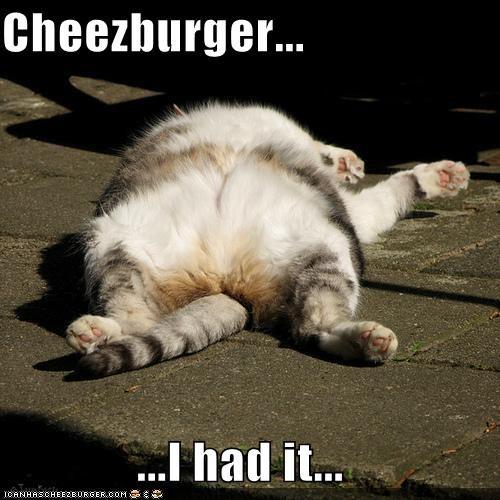Cheezburger Image 4447644672