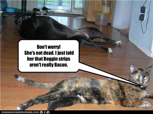 are not,bacon,beggin strips,cat,dead,dont worry,fainted,fainting,false,great dane,lies,not,reassuring,truth