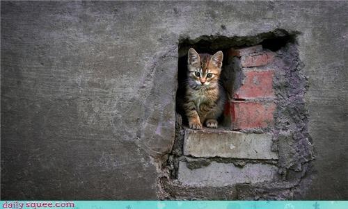 bird cat catchphrase comic comic book fortress of solitude kitten phrase plane quote Super superman - 4447865344