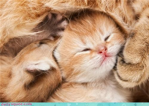 asleep ball content cuddling cuddly Fluffy fuzzy happy i has kitten sleeping smiling squee tiny warm
