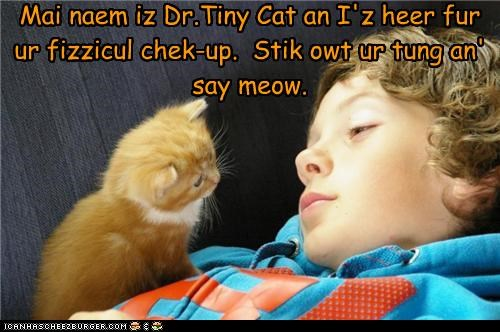 caption,captioned,cat,check up,doctor,dr tinycat,instructions,kitten,tiny