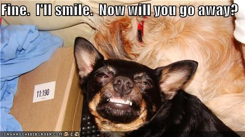 chihuahua conceding do not want fine go away Okay please question request smile smiling upset