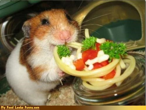 cute eating hamster noodles pasta spaghetti - 4448943104