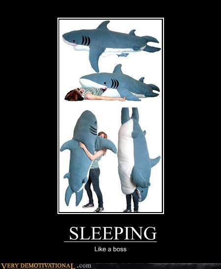 Pillow,boss,shark,sleeping
