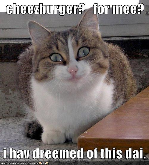 Cheezburger Image 4449502976