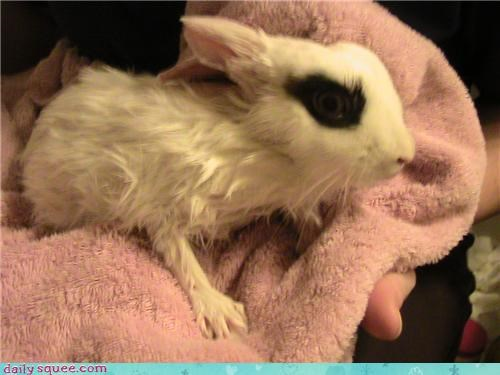 after,bath,bunny,carrot,cooperative,dwarf,Fluffy,i can has,question,rabbit,reward,wet