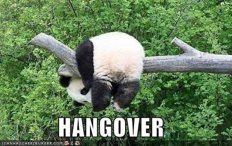 bear,branch,caption,captioned,dangling,hanging,hangover,literalism,over,panda,panda bear,tree