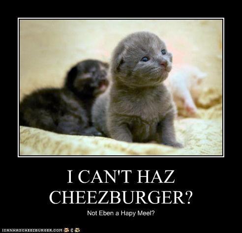 Cheezburger Image 4449908480
