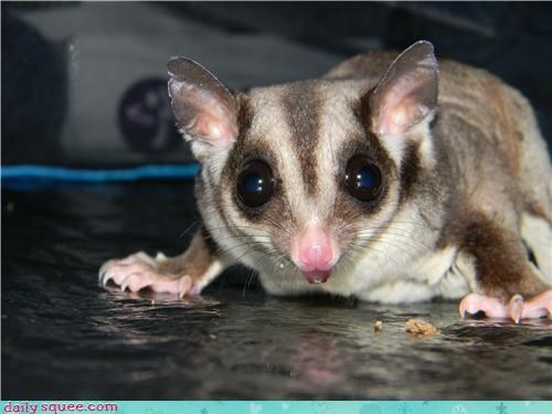 after eating post reader squees satisfaction satisfied snack sugar glider